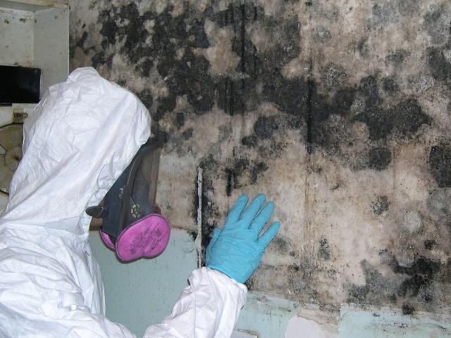 Mold Remediation – USA Building Restoration and Inspections